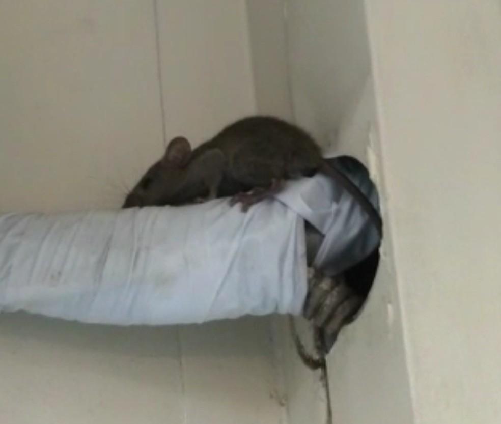 Rato foi flagrado na UPA de Angra dos Reis — Foto: Reprodução/Redes Sociais