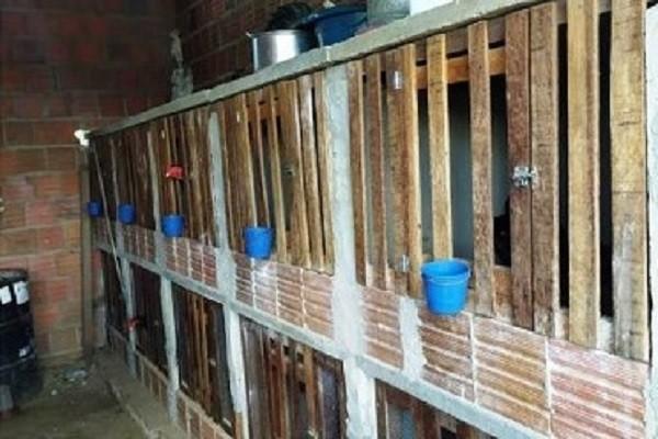 27 pessoas são detidas por descumprir isolamento social e fazer rinha de galo no interior do RN