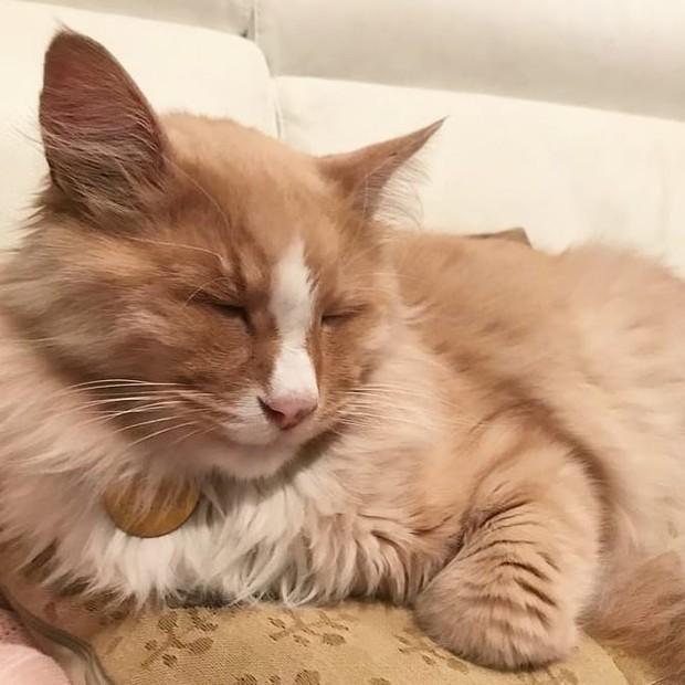 'Gato-celebridade' da Nova Zelândia concorre a prêmio de cidadão do ano (Foto: Reprodução / Instagram @mittensofwellington)