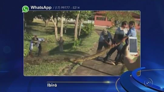 Funcionários resgatam sucuri encontrada em lago de termas de Ibirá