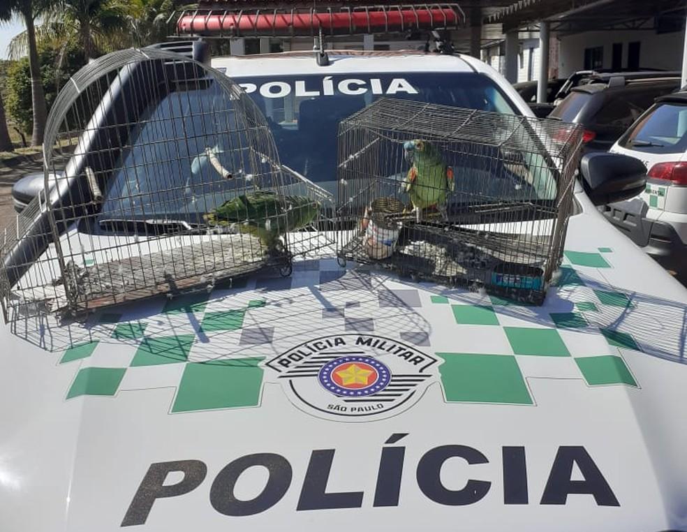 Aves silvestres eram mantidas irregularmente em cativeiro em Presidente Prudente — Foto: Polícia Militar Ambiental
