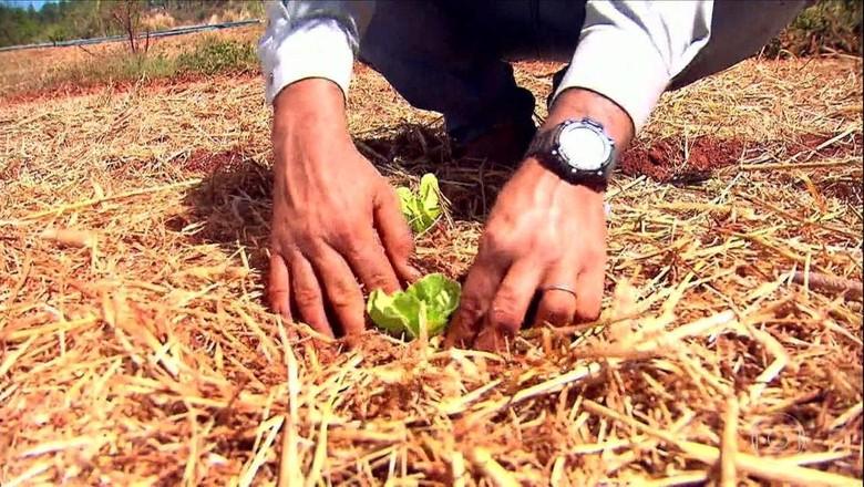 hortalica-plantio-direto-campo (Foto: Reprodução/TV Globo)
