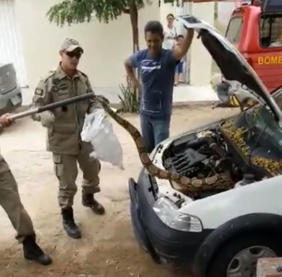 Cobra estava escondida dentro de carro em Iguatu.jiboia — Foto: Reprodução/SVM