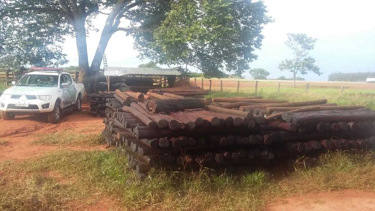 Sitiantes são multados em mais de R$ 327 mil por manter madeira nativa sem documentação legal