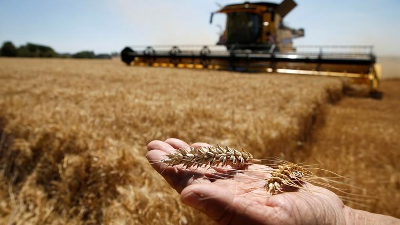 agricultura-trigo-colheita-franca (Foto: Pascal Rossignol/Reuters)
