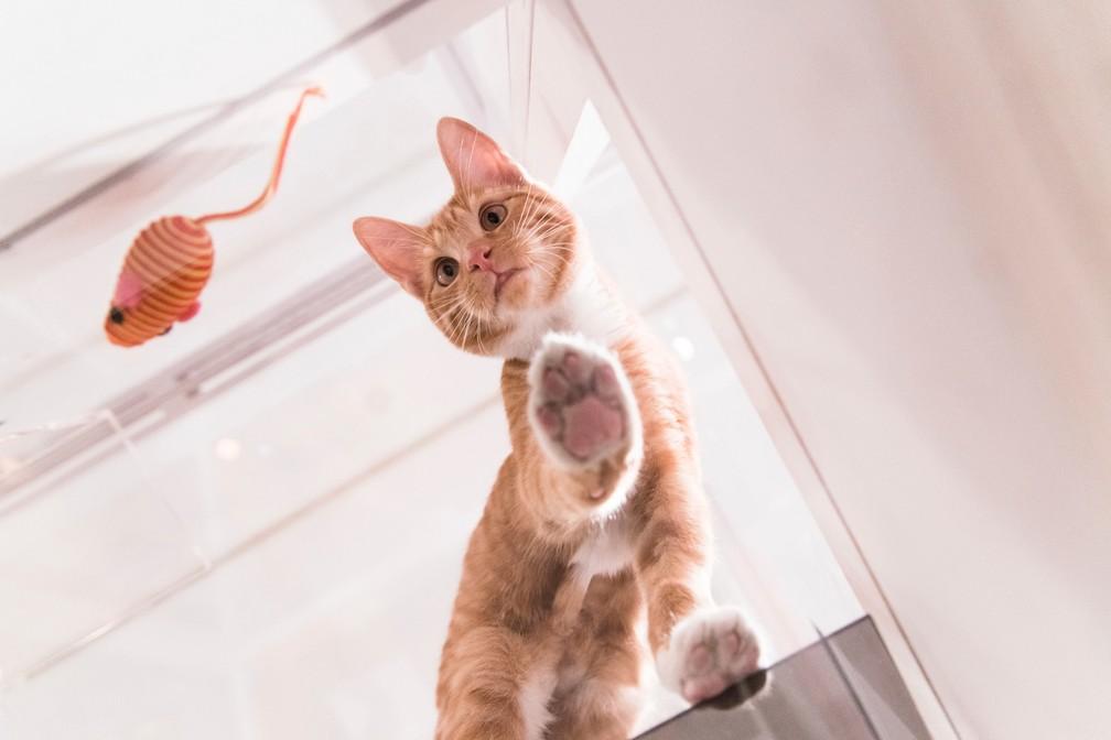 Nova York expõe gatos para adoção em 'telhado de vidro' (Foto: Loren Wohl for Fresh Step/AP Images)