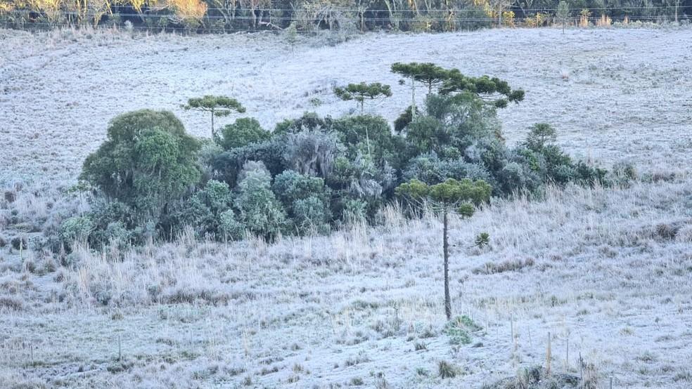 Vegetação ficou coberta por gelo nesta quinta-feira (1º) — Foto: Mycchel Legnaghi /São Joaquim Online