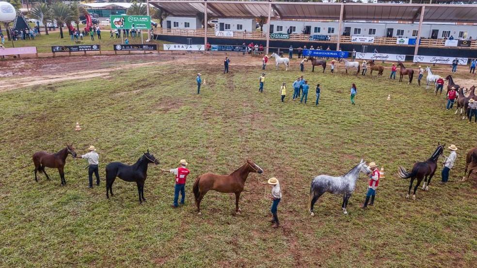 Animais em exposição na Granja do Torto — Foto: Seagri/Divulgação