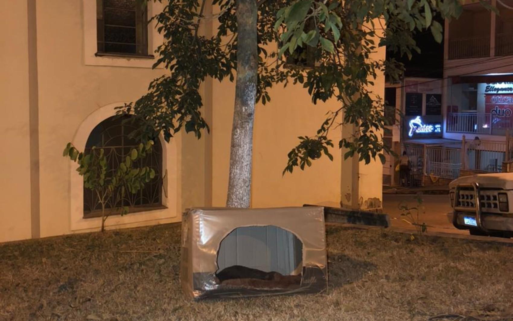Prefeitura coloca casinhas de papelão para proteger animais de rua contra o frio em Poço Fundo, MG