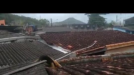 Tamanduá-mirim é resgatado do telhado de casa em Caraguá, SP