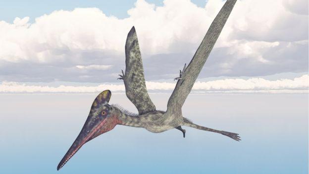 São conhecidas mais de 200 espécies de pterossauro, com tamanhos que variavam de alguns metros até 12 metros de envergadura (Foto: MR1805/GETTY/Via BBC News Brasil)