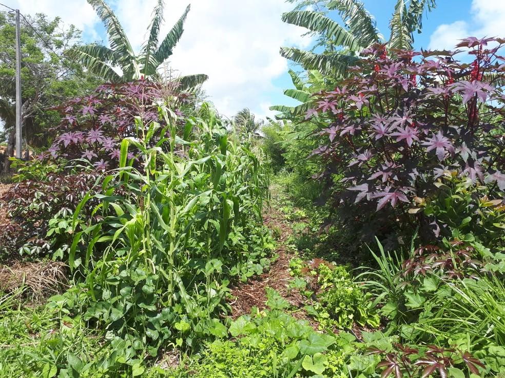 Produção de produtos orgânicos vendidos através do Ifarm ocorre em fazendas na região metropolitana de Natal — Foto: Cedida