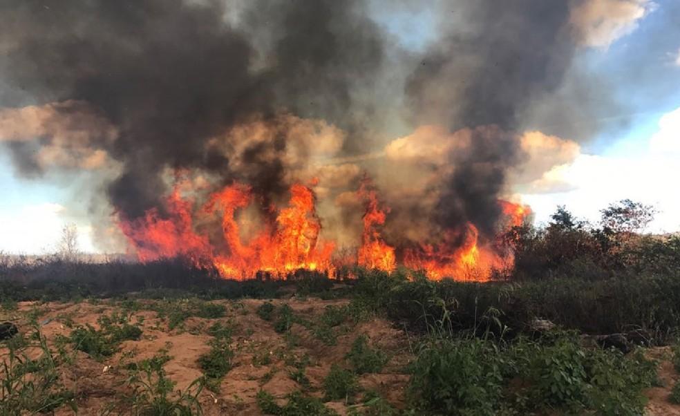 634 mil pés de maconha foram destruídos durante a Operação Baraúna-III (Foto: Polícia Federal)