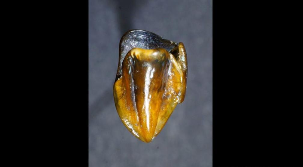 Dentes de primatas de 9,7 milhões de anos  (Foto: Picture-alliance/dpa/Naturhistorischen Museum Mainz)