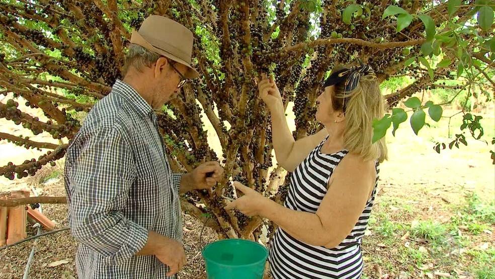 Agricultor conta o apoio da mulher para manter a produção — Foto: TVCA/Reprodução