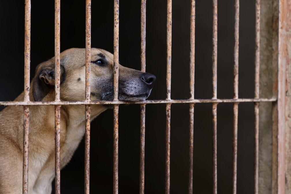 Animais adultos costumam ter mais dificuldade de conseguir passar pelo processo de adoção, aponta ONG — Foto: Marcelo Brandt/G1
