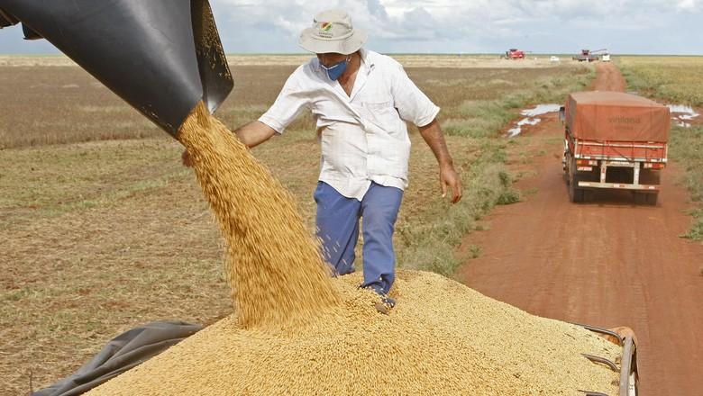 colheita-soja-campo-novo-dos-parecis-graos (Foto: Ernesto de Souza/Ed. Globo)