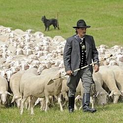 Pastor e ovelhas (Foto: Arquivo Google)