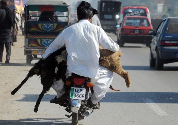 Um homem que viajava na garupa de um moto foi flagrado carregando dois carneiros, na quinta-feira (25), em uma estrada da cidade de Lahore, no Paquistão. (Foto: Arif Ali/AFP)