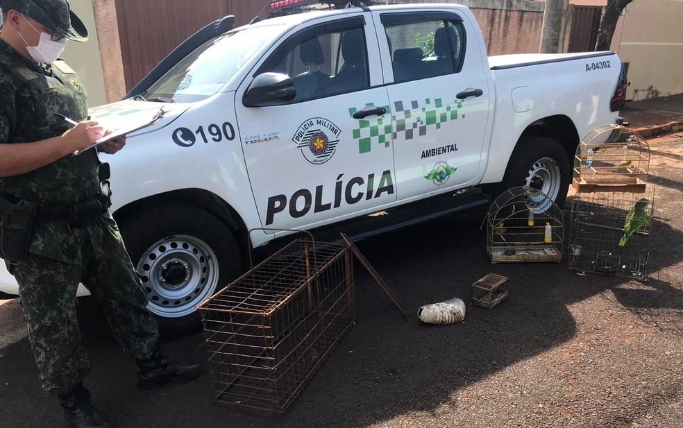 Polícia Ambiental apreende aves silvestres mantidas em cativeiro em Sales Oliveira, SP — Foto: Polícia Ambiental/Divulgação