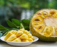 Jaca: conheça seus benefícios e aprenda seis receitas surpreendentes com a fruta
