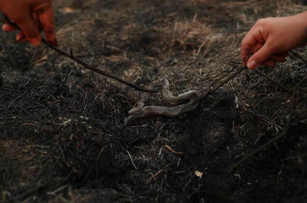 A estudante de veterinária Isabella Cristina Pereira Britto e a guia local Eduarda Fernades observam uma cobra morta após incêndio no Pantanal — Foto: Amanda Perobelli/Reuters