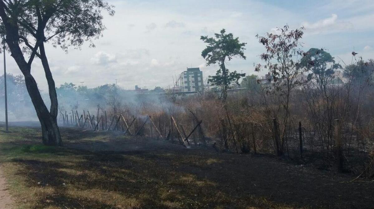 Fogo atinge vegetação às margens da BR-101 em Campos, no RJ