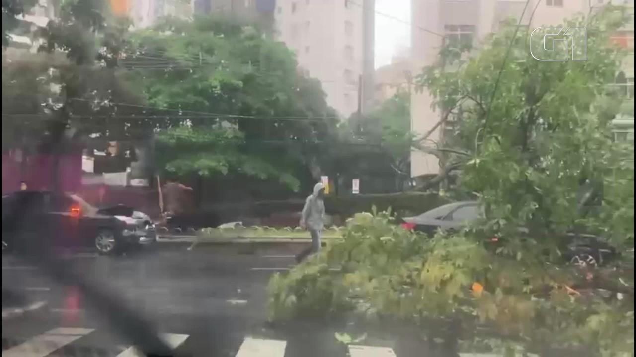 VÍDEO: Árvore cai em carro em movimento