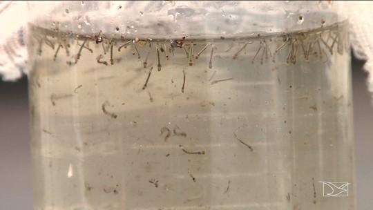 População está em alerta em relação a dengue em Santa Inês