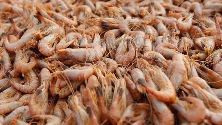 camarao-carcinicultura-pescado-aquicultura (Foto: Thinkstock)