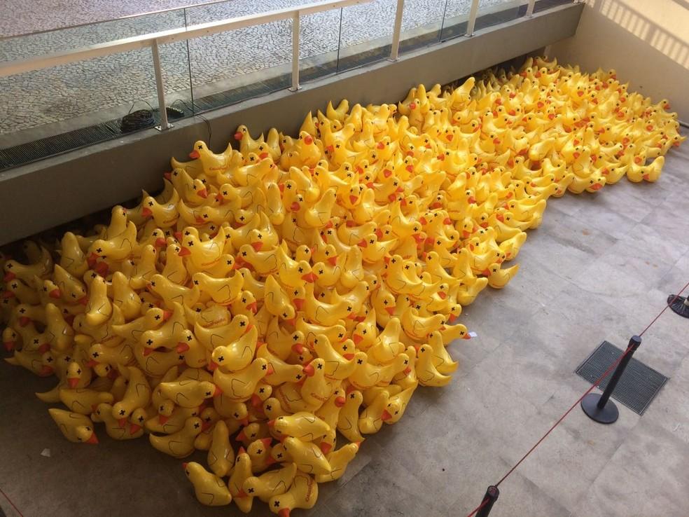 Patos serão distribuídos (Foto: Paula Paiva Paulo/G1)