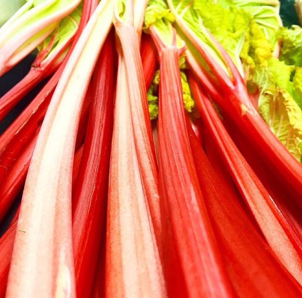 Ruibarbo: talos são populares na culinária, mas folhas contêm grande quantidade de ácido oxálico, que provoca insuficiência renal  — Foto: Reprodução/Instagram/@chefgugarocha