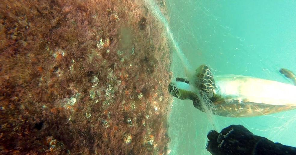 Tartarugas foram encontradas mortas presas a rede de pesca na costa de Itanhaém, SP (Foto: Divulgação/IPM)