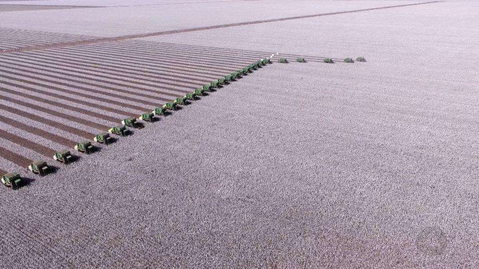 -  Força-tarefa reúne quase 30 colheitadeiras colheita do algodão em fazenda em Sapezal  MT   Foto: Reprodução/TVCA