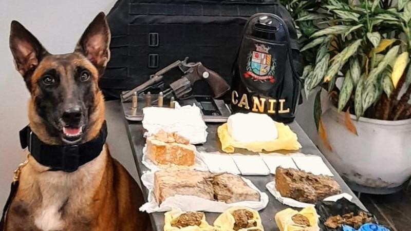 GCM de Itapetininga apreende drogas e arma com apoio da cadela Akila
