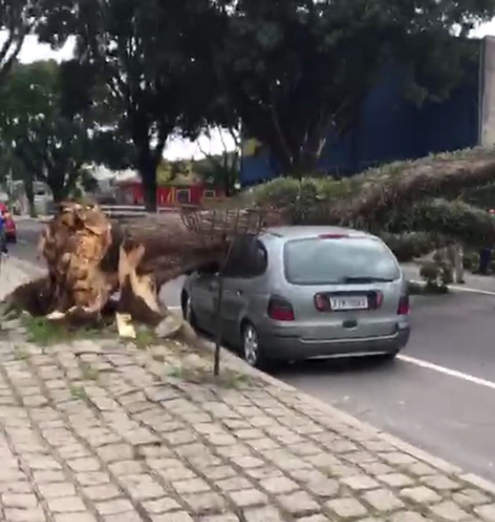 Árvore cai sobre carro e bloqueia rua no bairro Bacacheri — Foto: Colaboração/RPC