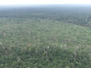 Reserva em Machadinho D'Oeste, RO (Foto: Reprodução/Rede Amazônica)