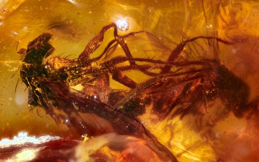 Australianos encontram âmbar com fósseis de moscas acasalando
