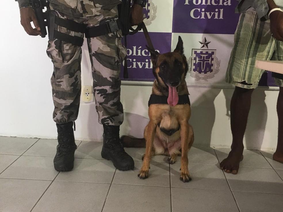 Operação contou com a participação do cão Ende — Foto: João Souza/G1