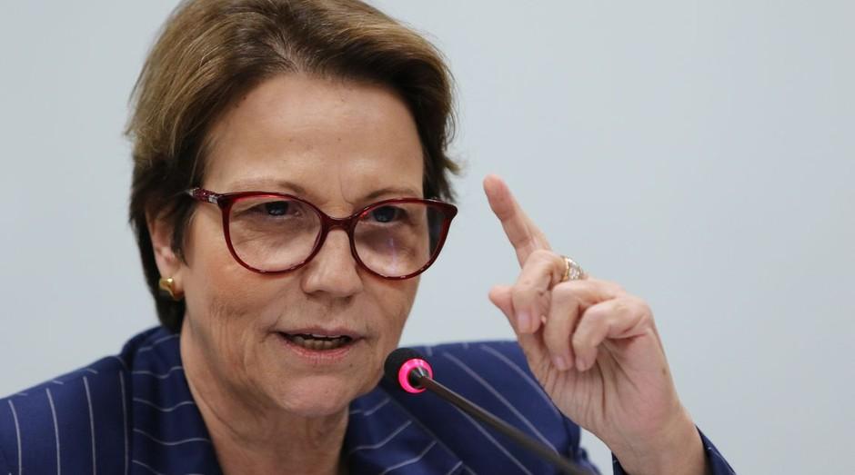 Ministra da Agricultura, Pecuária e Abastecimento, Tereza Cristina  (Foto: Fabio Rodrigues Pozzebom/Agência Brasil)
