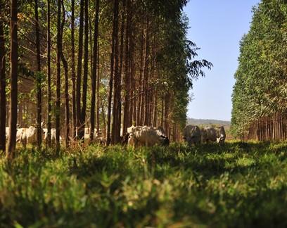 Reino Unido investe na expansão da agricultura sustentável no Cerrado