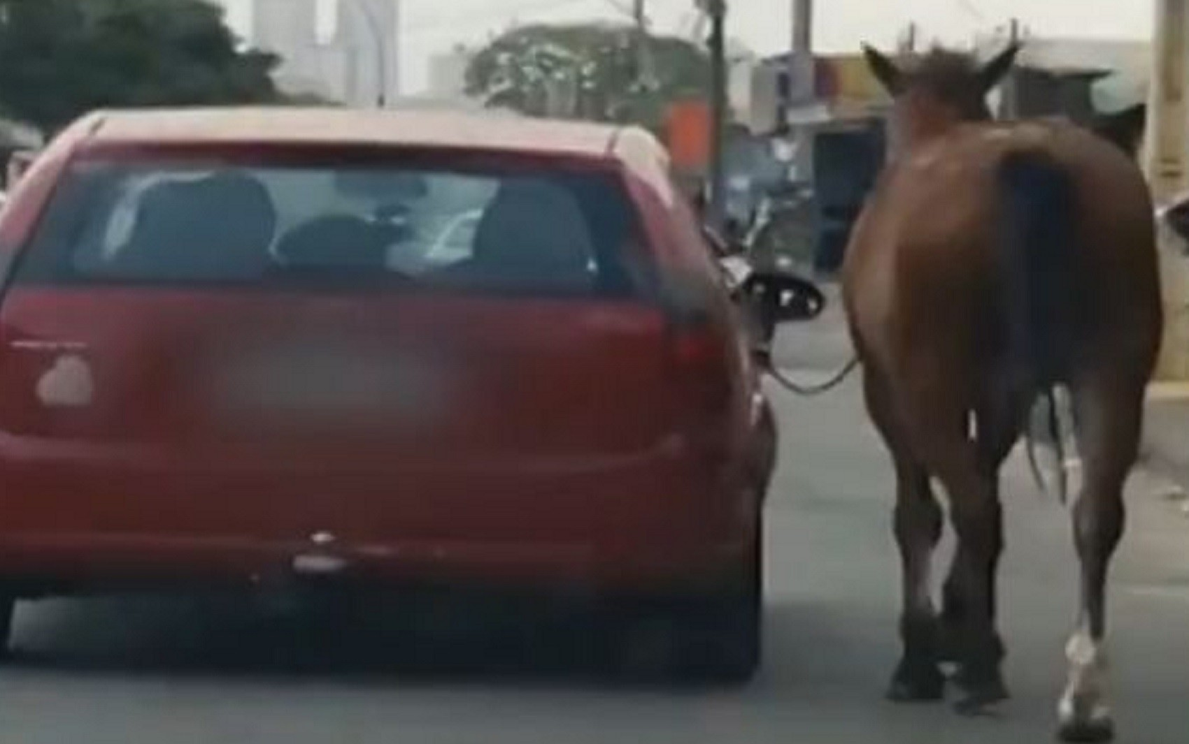 Cavalo é puxado por ocupante de carro em movimento em Aparecida de Goiânia; vídeo