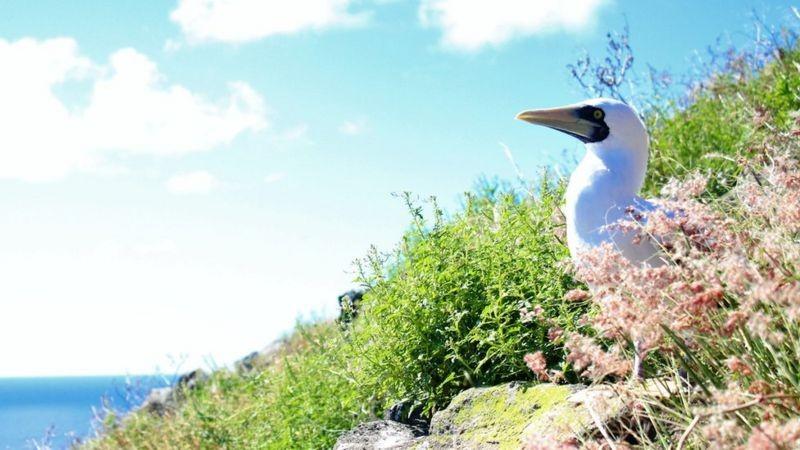Redonda, a ilha caribenha povoada por ratos e cabras que se transformou em paraíso ecológico thumbnail