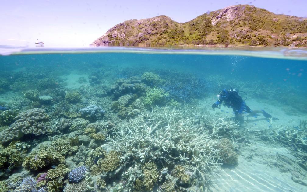 Grande Barreira de Corais começa a apresentar sinais de desbotamento (Foto: WWF Austrália/AFP)