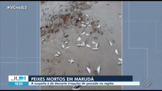 Moradores de Marudá, no PA, filmam grande quantidade de peixes mortos pela praia; veja