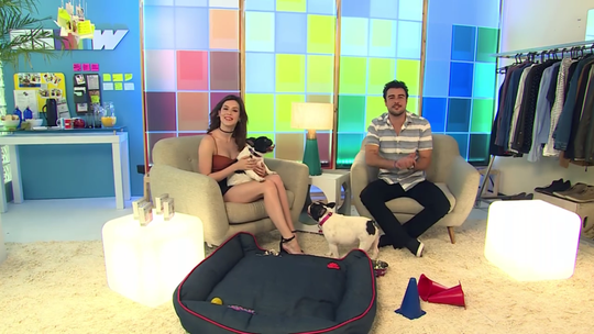 Fofurômetro no máximo: cachorrinhas participam do Vídeo Show