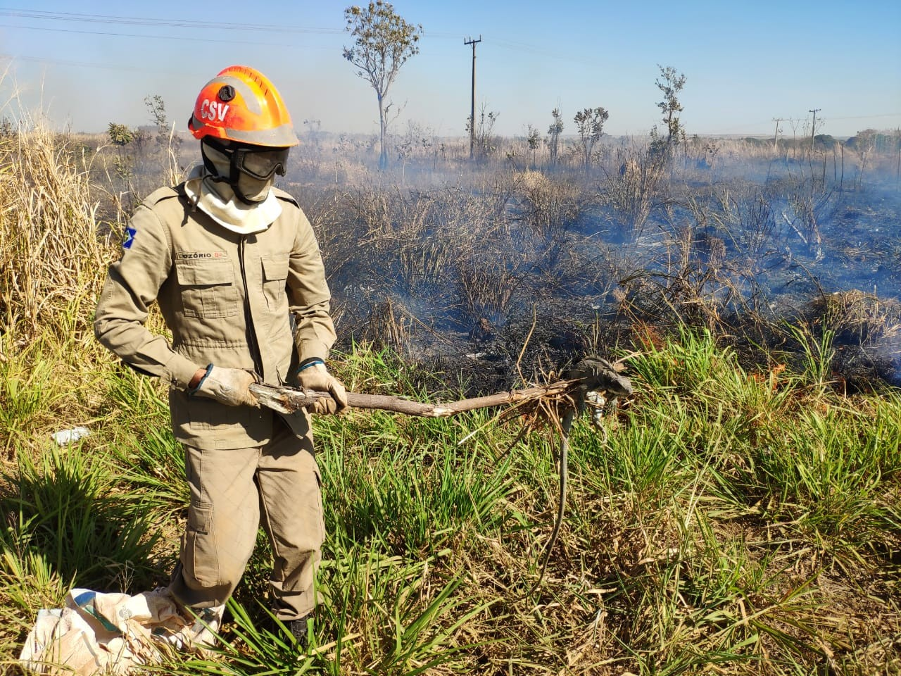 Iguana é resgatada pelos bombeiros durante incêndio em pasto em MT