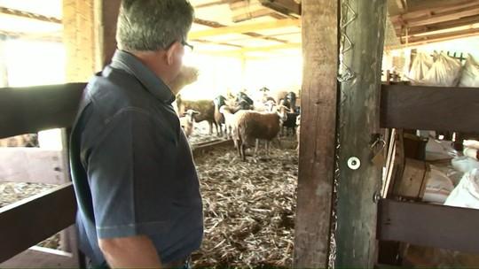 Produtores relatam prejuízos com o furto de animais no Paraná