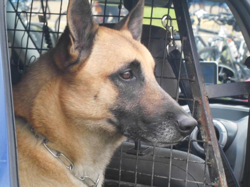 Cão da GM premiado no Guiness Book morre em Jundiaí — Foto: Reprodução/Guarda Municipal de Jundiaí
