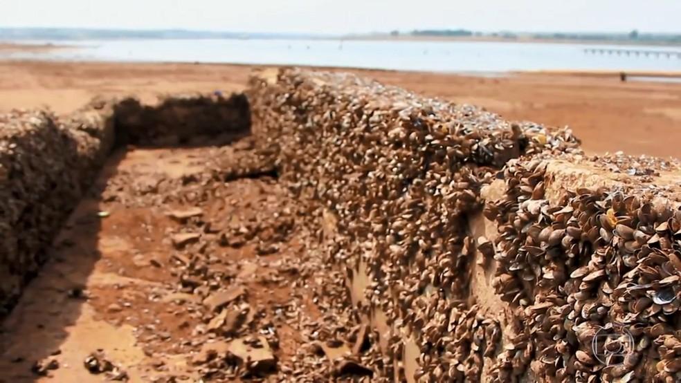 Antigo bebedouro usado por animais em Rubineia — Foto: Reprodução/Tv Tem